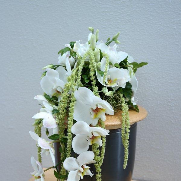 Weiße Orchidee Bild 1