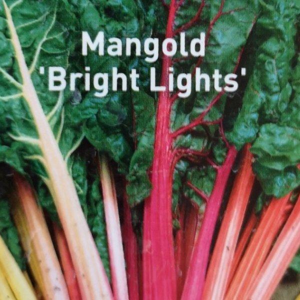 Mangold 'Bright Lights' Bild 2