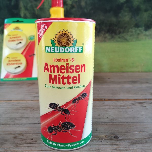 Neudorf Ameisen Mittel Bild 4