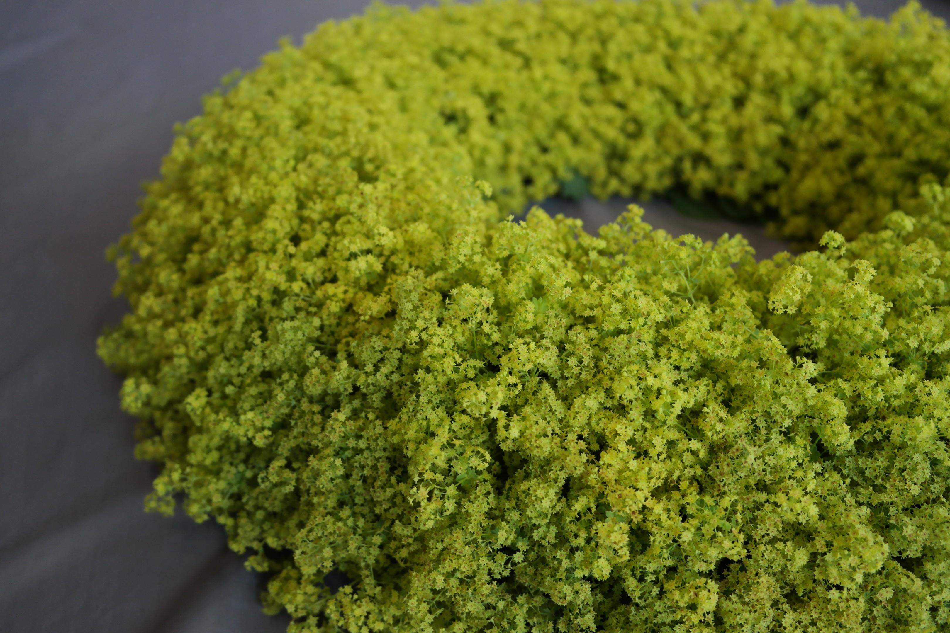 Kraft der Farbe Grün Bild 2