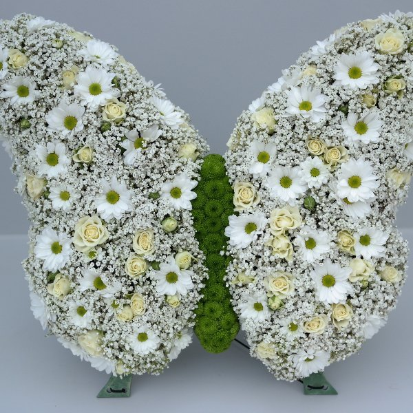Schmetterling Bild 1