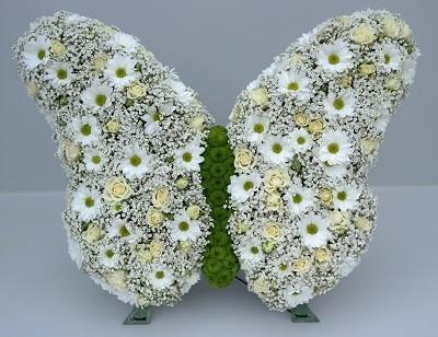 Schmetterling Bild 2