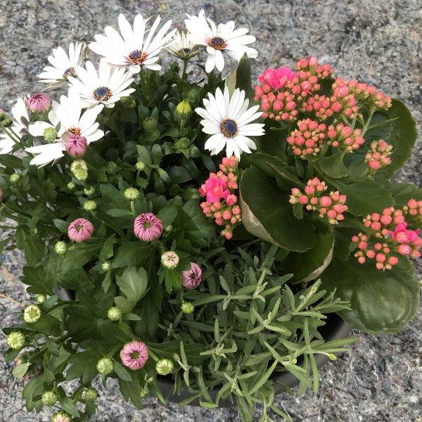 Blütenzeit Bild 1
