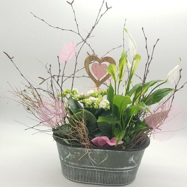 Pflanzkorb mit kleinen Zimmerpflanzen Bild 1
