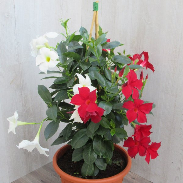 Blütentraum Bild 1