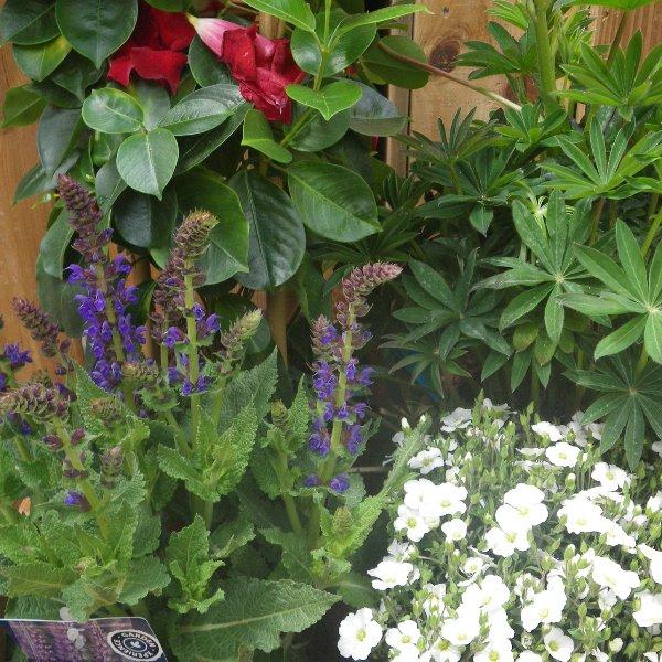 bunte Blumenkiste der Saison Bild 2