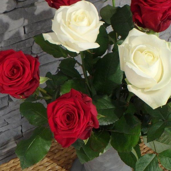 Rose einzeln Bild 1