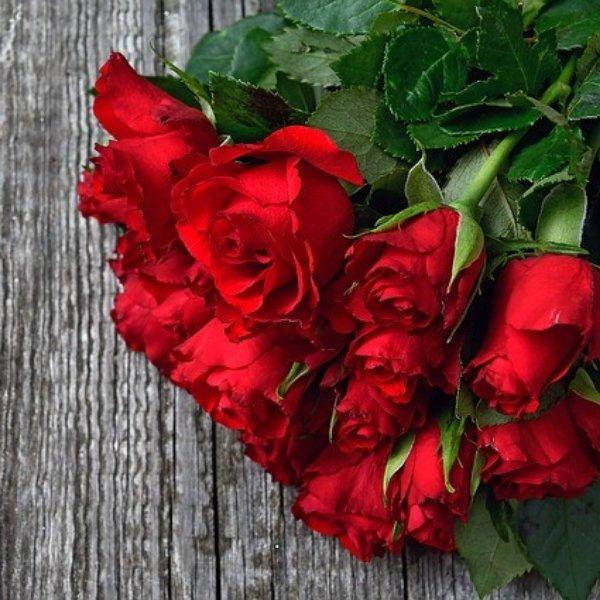 Rote Rosen Bild 1