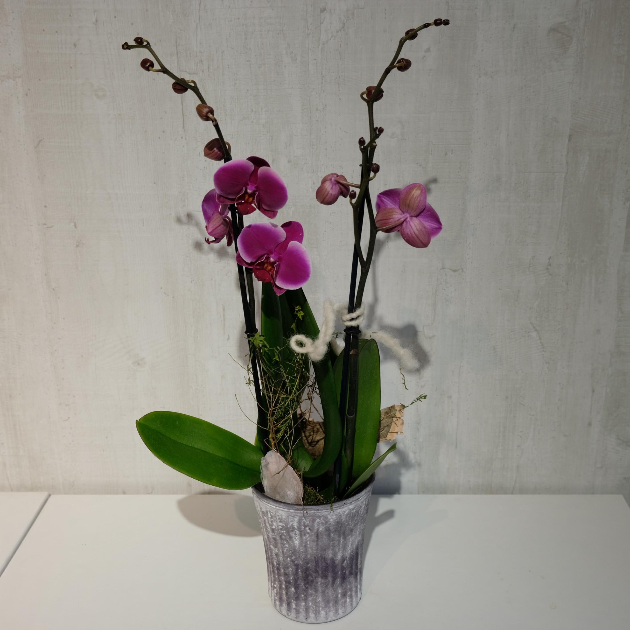 Orchidee Bild 4
