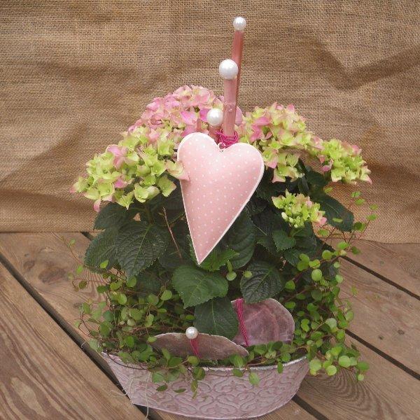 bepflanzte Schale für die Wohnung in rosa Tönen Bild 2