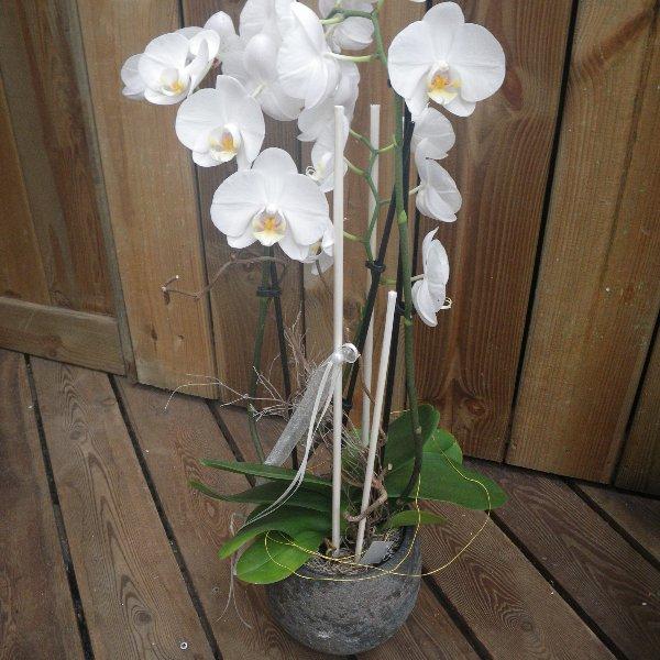 Orchidee im Umtopf mit Schmuck Bild 1