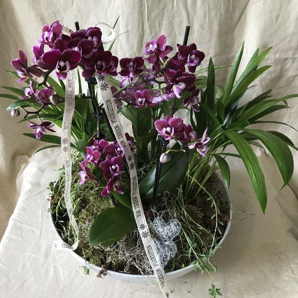 Für die Orchideenliebhaberin Bild 1