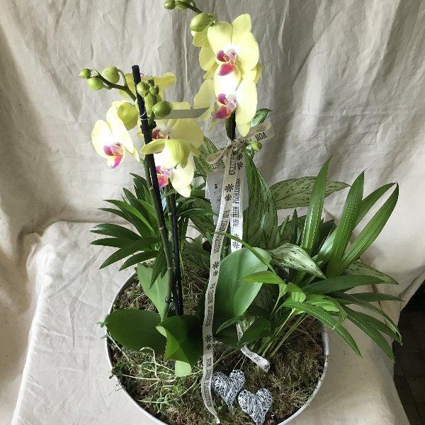 Für die Orchideenliebhaberin Bild 2