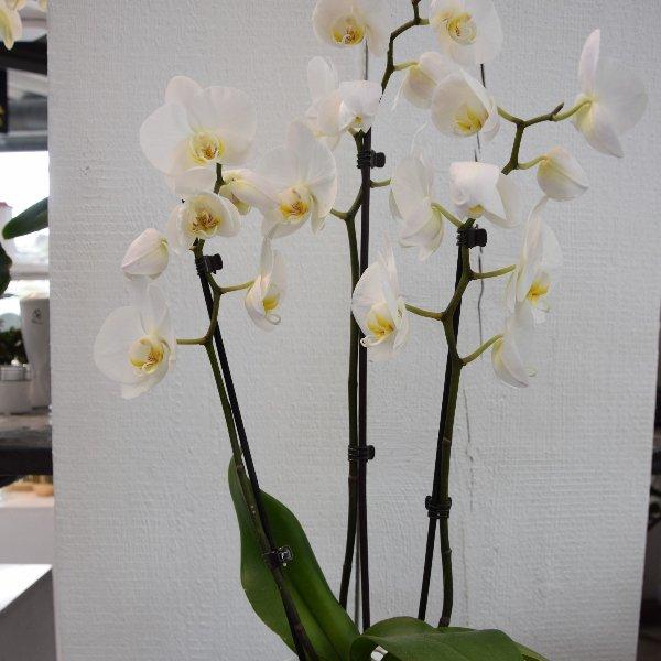 Orchideen Bild 1