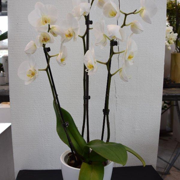 Orchideen Bild 2