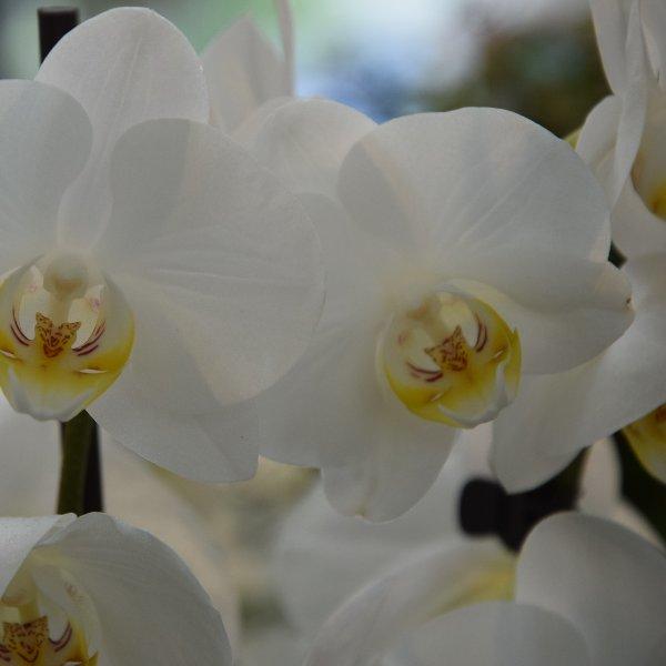 Orchideen Bild 3