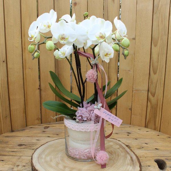 Phalaenopsis im Glas Bild 1