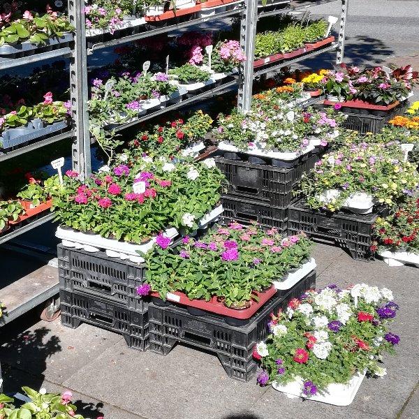 Verschieden Sommerpflanzen Bild 1