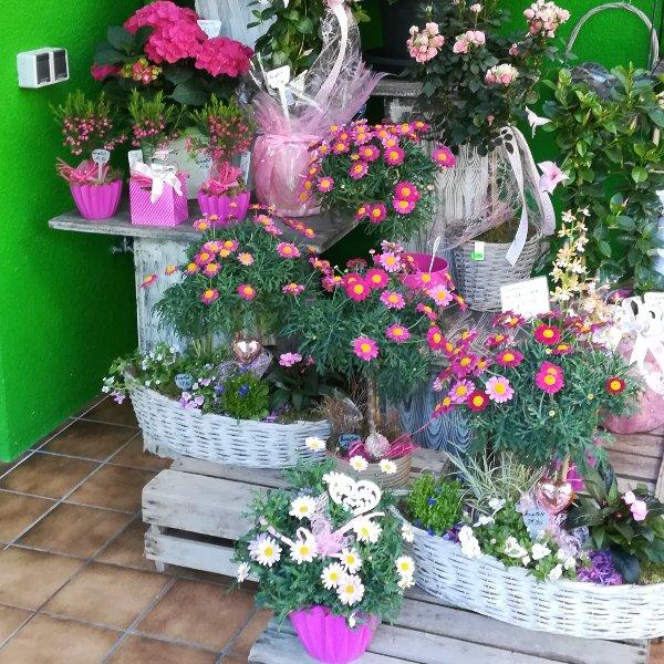 Verschieden Sommerpflanzen Bild 2