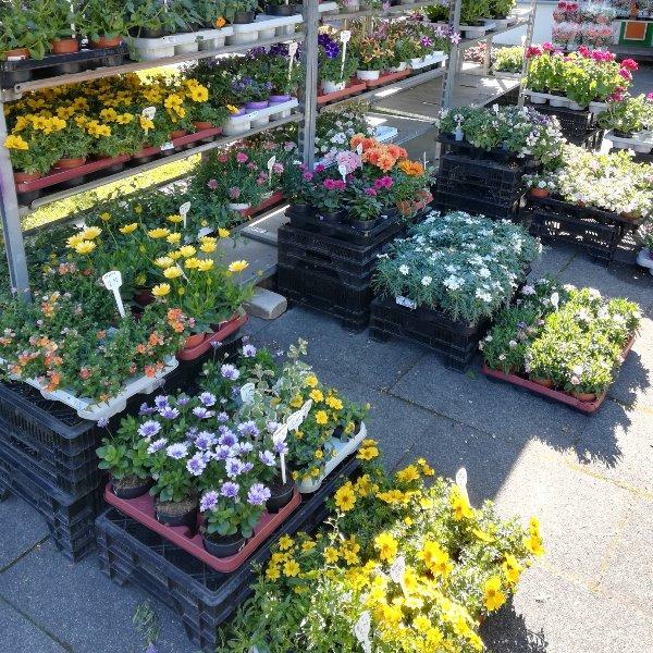 Verschieden Sommerpflanzen Bild 3