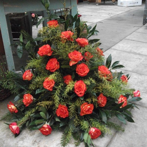 Orange Rosen Bild 1