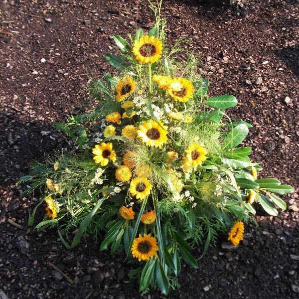 Sonnenblumen Bild 1